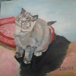 Petit chat 39.5 cm carré