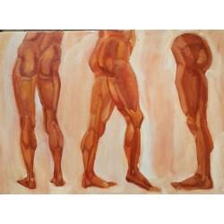 myologie de la jambe
