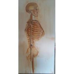 Squelette tète et tronc
