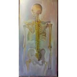 Tête et tronc vue dorsale
